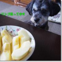 トリミングと・・・リンゴだよ!