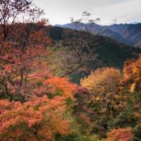 紅葉の高尾山あるき