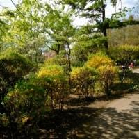 葉桜と八重桜