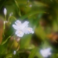 MAMIYA-SEKOR SF C 1:4 f=145mm (9)
