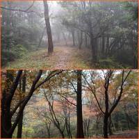 四王寺 悠久の森を散歩