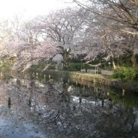ヤッパリこの時期、さくら・🌸・桜  晴れても雨でも 咲く桜と散る桜かな ^^!