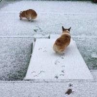 プチ雪遊び