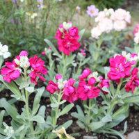 「おはようの花」 ストック1月