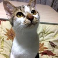 11月27日(日)の譲渡会inペッツマート浜松店『入野』