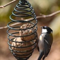 3月の鳥さん達