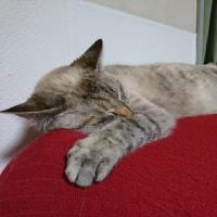 ルーちゃん爆睡