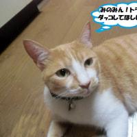 北九州市小倉南区「鱒渕ダム」②&トラも抱っこしてほしいニャ~=^_^=