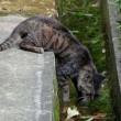 ネコという生き物