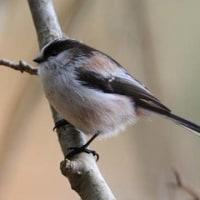 小鳥の姿がわかりますか