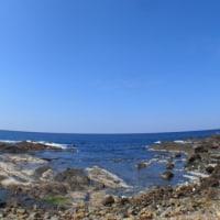 海よし!天気よし!ダンゴウオのコロニーへ行ってきました♪♪