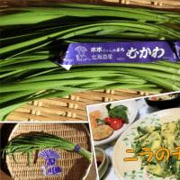 北海道むかわ産のニラで、チヂミを作ったら~(*^^)v