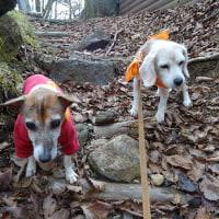 レットさん、ルーさんと甑岳登山と国道223号紅葉撮影。