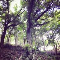 樹と水の旅