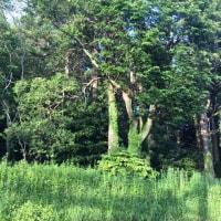オサンポ walk - 緑薫る fresh greens