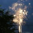 合歓の木&アメヒト&ハチの巣&花火