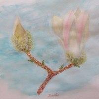 白木蓮とハナカイドウの絵を描く