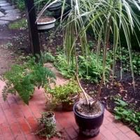 遠出の前の準備・観葉植物