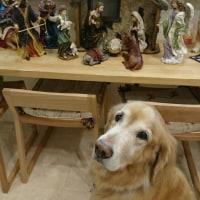 11月30日(水)…《犬の生活論》出席