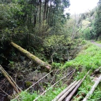 『谷戸川渓谷』 倒木