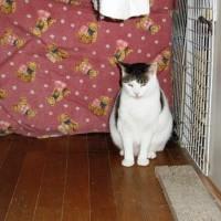 他の猫をいじめる猫