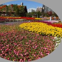 梅田北ヤードのお花を見に
