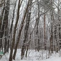 どうぶつ・ティータイム(201) 『一夜の雪に大わらわ』