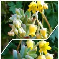 ベランダの花達③~♪