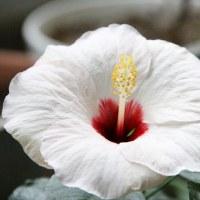 フーガちゃんとベランダのお花たち