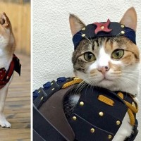 忍 者 猫  鎧を着た犬