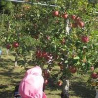 りんご狩り
