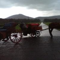 雨の中、離宮庭園の馬車に乗った