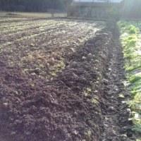 春の野菜の作業パート ー3