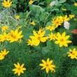 7月に咲く花~中旬まで
