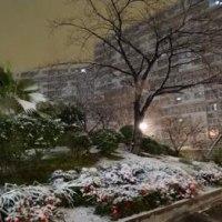 3年前の大阪の雪の想い出