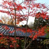 紅葉狩り ~京都・東福寺~