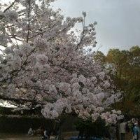 4/9練習報告♪