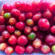 ☆ ミニトマトの甘酢漬け ☆