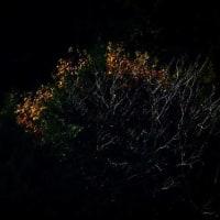 広葉樹のある風景