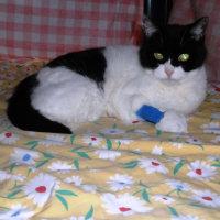 退院した猫