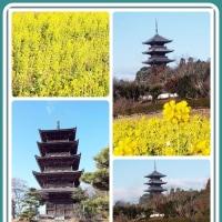 国分寺の五重塔と菜の花