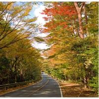 霧島・えびの高原周辺の紅葉