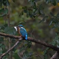 水流区の野鳥