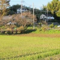 今回は麻生区黒川の里山の風景を紹介します