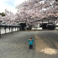 松江城のお花見