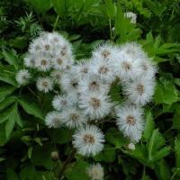 平成29年6月24日(土) 白馬尻までの花見♪
