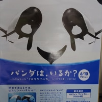 「イロワケイルカ」/八景島シーパラダイス