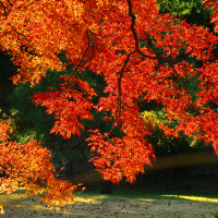 六義園と国立博物館の庭園の紅葉