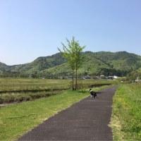 今日のお散歩も楽しそ〜♪