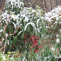 神戸避暑地もこの冬初積雪
